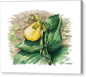 Canvas Print featuring the painting Ladyslipper by Bob  George