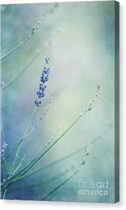Laggard Canvas Print by Priska Wettstein