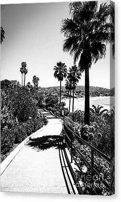 Laguna Beach Heisler Park In Black And White Canvas Print by Paul Velgos
