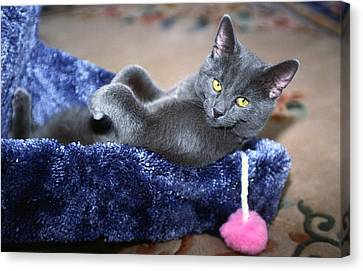 Laid Back Canvas Print by Sally Weigand