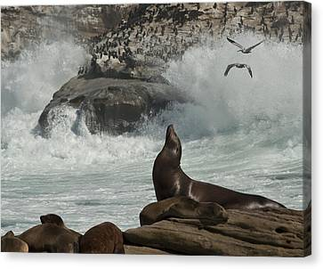Lajolla Surf N Nature Preserve Canvas Print by Daniel Hebard