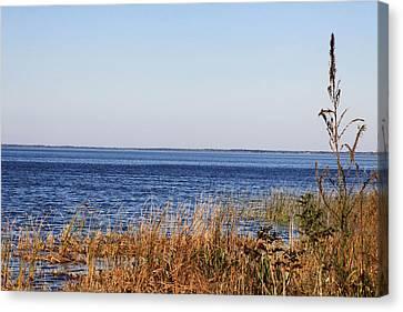 Canvas Print featuring the photograph Lake Apopka 2 by Chris Thomas