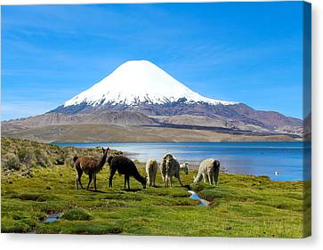 Lake Chungara Chilean Andes Canvas Print by Kurt Van Wagner