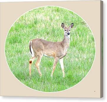 Lake Country Doe   Canvas Print by Will Borden