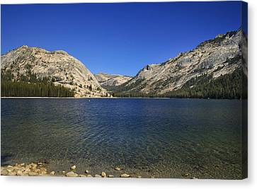 Lake Ellery Yosemite Canvas Print by David Millenheft
