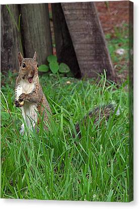 Canvas Print featuring the photograph Lake Howard Squirrel 000 by Chris Mercer