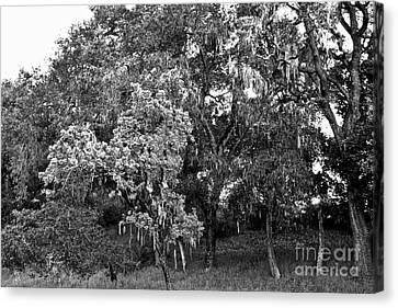 Canvas Print featuring the photograph Lake Lopez Oaks Bw    by Gary Brandes
