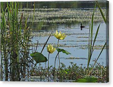 Canvas Print featuring the photograph Lake Marion Morning by Deborah Smith