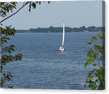 Lake Ontario Sailing Canvas Print by Kevin Croitz