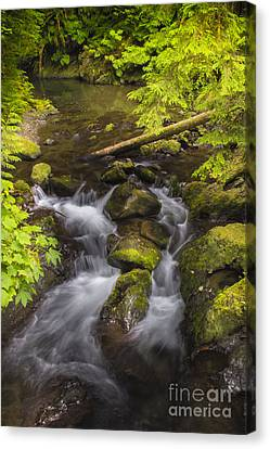 Lake Quinault Creek 2 Canvas Print