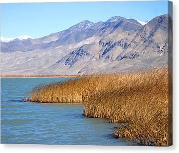 Lake Reeds Canvas Print