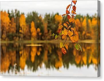 Lake Reflections Of Fall Foliage  Canvas Print by Aldona Pivoriene