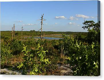 Lake View II. Lake Wales Ridge. Canvas Print by Chris  Kusik