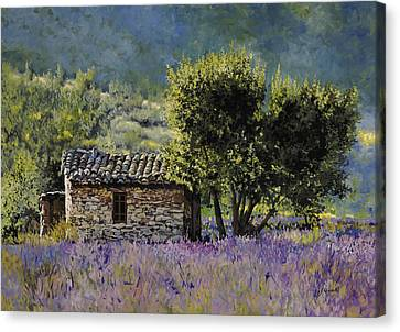 Lala Vanda Canvas Print by Guido Borelli