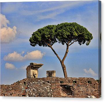 L'albero Canvas Print by Oscar Alvarez Jr