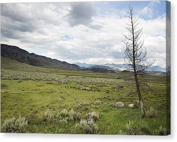 Canvas Print featuring the photograph Lamar Valley No. 1 by Belinda Greb