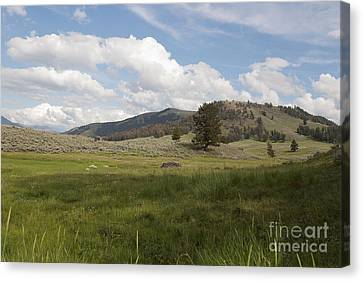 Canvas Print featuring the photograph Lamar Valley No. 2 by Belinda Greb