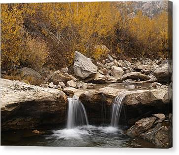 Lamoille Creek Canvas Print by Jenessa Rahn