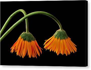 Lamp - Like Flowers Canvas Print by Marwan Khoury