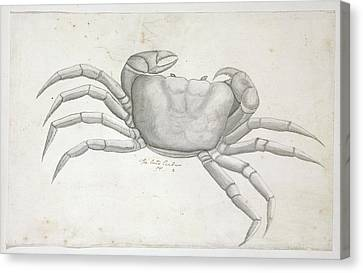 Land Crab Canvas Print by Natural History Museum, London