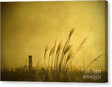 Land Of Stillness Canvas Print by Chris Armytage