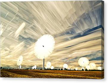 Land Of The Giant Lollypops Canvas Print by Matt Molloy