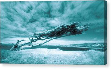 Lands End Canvas Print by Daniel Furon