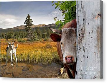 Landscape - Animals - Peek A Boo Cow Canvas Print by Liane Wright