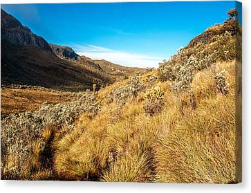 Ruiz Canvas Print - Landscape At Nevado Del Ruiz by Jess Kraft