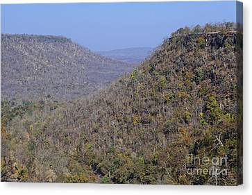 Landscape At Panna National Park In India Canvas Print by Robert Preston