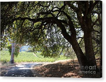 Napa Valley And Vineyards Canvas Print - Landscape At The Jack London Ranch In The Sonoma California Wine Country 5d24583 by Wingsdomain Art and Photography