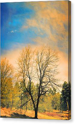 Landscape In Blue And Yellow  Canvas Print by Douglas MooreZart