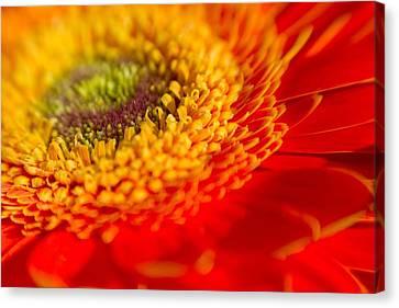 Landscape Of A Flower Canvas Print