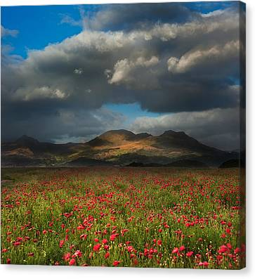 Landscape Of Poppy Fields In Front Of Mountain Range With Dramat Canvas Print by Matthew Gibson