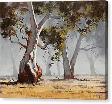 Gum Trees Canvas Print - Landscape Trees by Graham Gercken