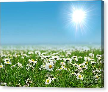 Landscape Vibrant White Flower Canvas Print by Boon Mee