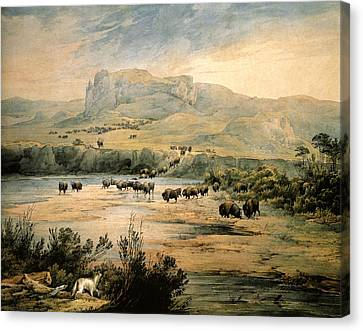 Landscape With Buffalo Ont The Upper Missouri Canvas Print by Karl Bodmer