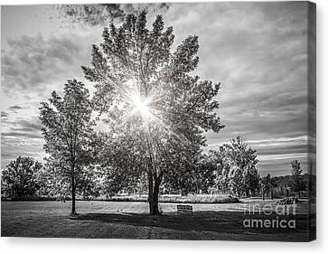 Landscape With Sun Shining Though Trees Canvas Print