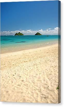 Lanikai Beach 2 - Oahu Hawaii Canvas Print by Brian Harig