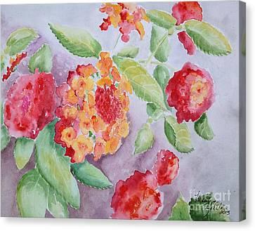 Lantana Canvas Print by Marilyn Zalatan