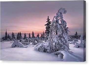 Lappland - Winterwonderland Canvas Print