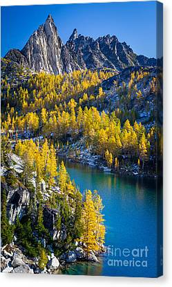 Larches At Perfection Lake Canvas Print by Inge Johnsson