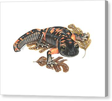 Large Blotched Salamander2 Canvas Print