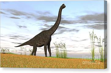 Large Brachiosaurus In A Grassy Field Canvas Print
