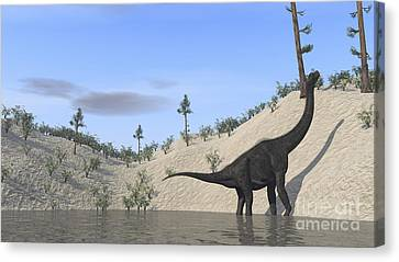 Large Brachiosaurus Standing In A Lake Canvas Print