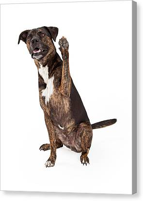 Large Brindle Dog Raising Paw Canvas Print by Susan Schmitz