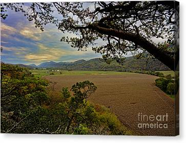 Large Cornfield In Valley Canvas Print by Dan Friend