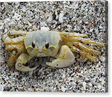 Canvas Print featuring the photograph Ghost Crab by Cynthia Guinn
