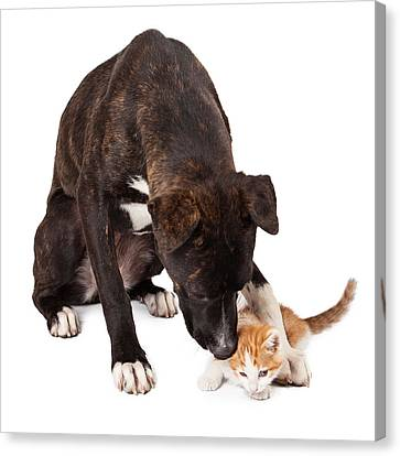 Large Dog Playing With Kitten Canvas Print by Susan Schmitz