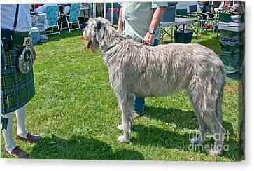 Large Irish Wolfhound Dog  Canvas Print by Valerie Garner